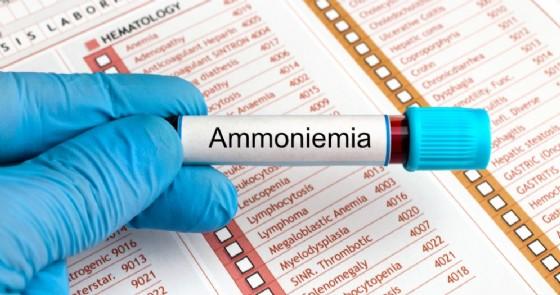 ammoniemia angellodecojpg Shutterstock