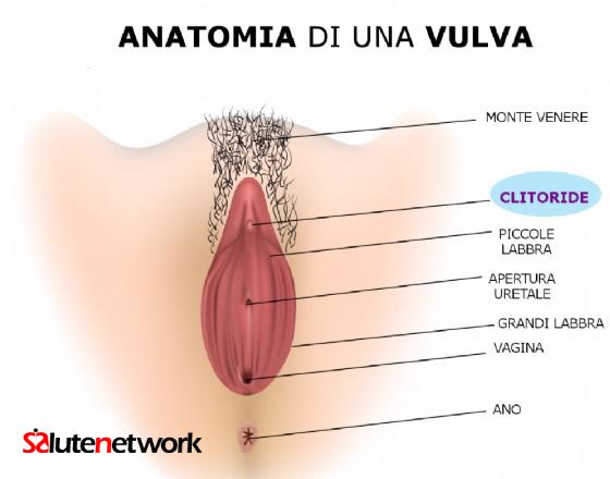 Clitoride