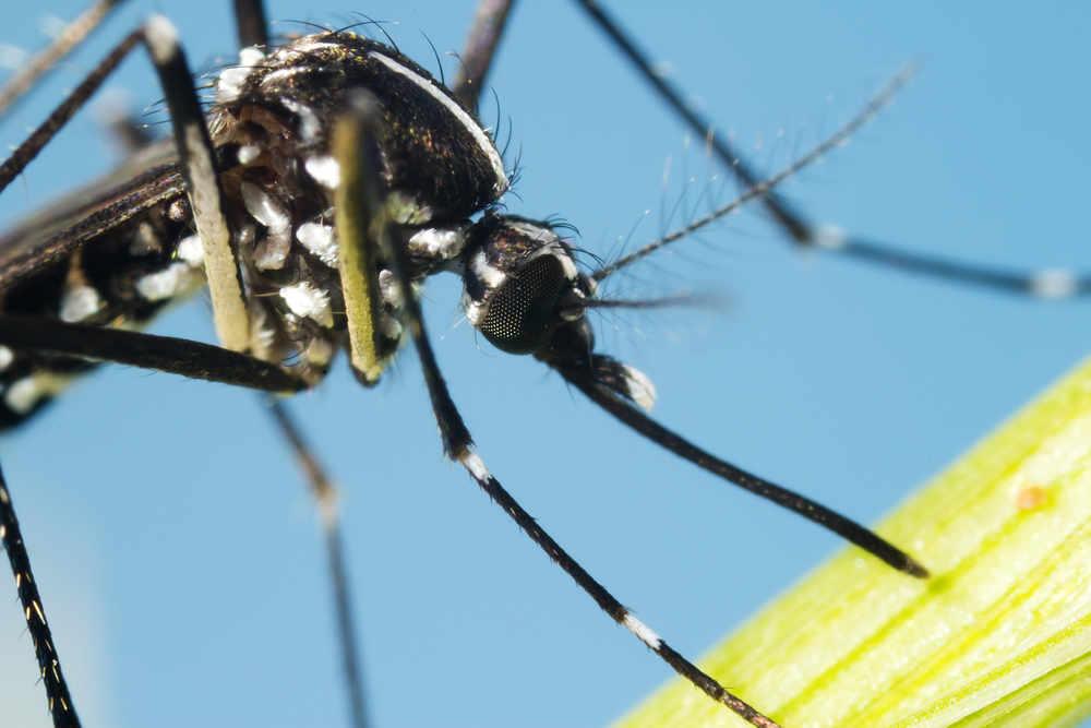 Viaggi e infezioni: attenzione alle zanzare