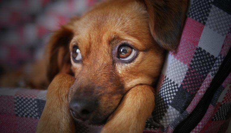 cibi da non dare ai cani